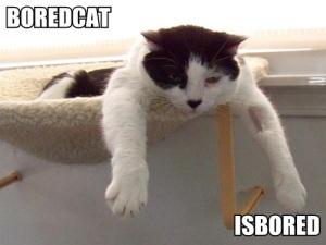 boredcat-isbored